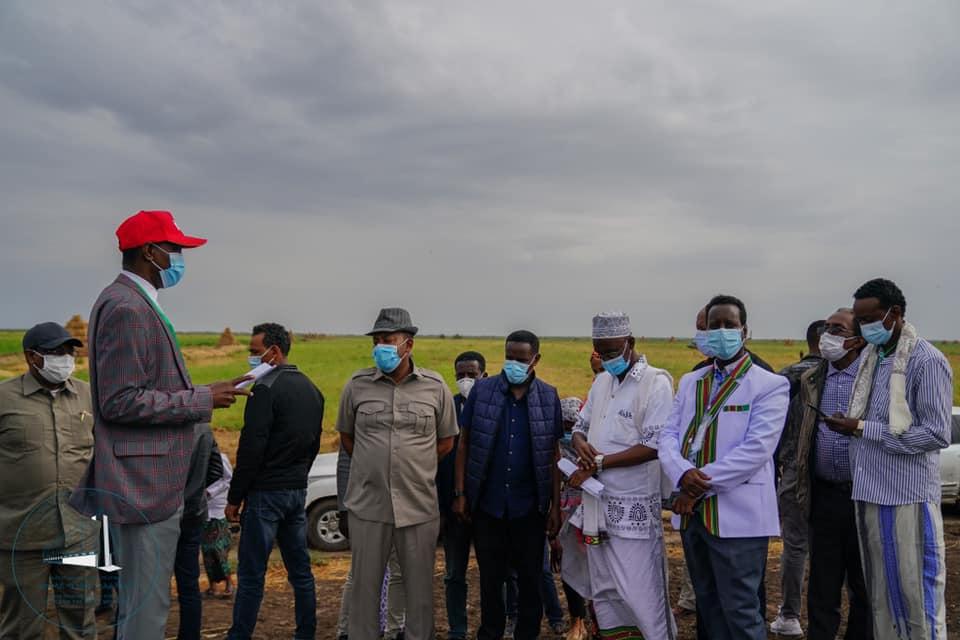 Ministirri Muummee Dr. Abbiyyi Ahimad Naannoo Affaar,Aanaa Duubitiitti lafa bal'ina heektaara 700 irratti kuusaa nyaata horii qophaa'e daawwataniiru.
